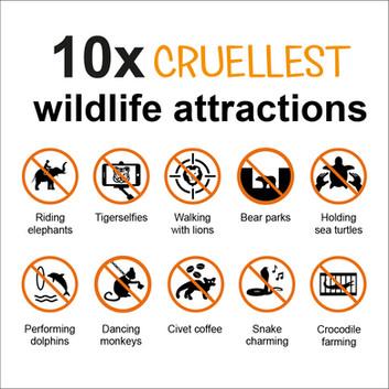 animal crualty web-02.jpg