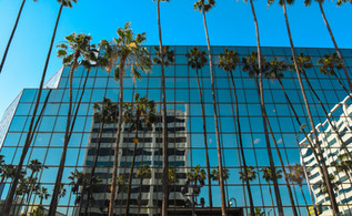 Reflection of the palms.