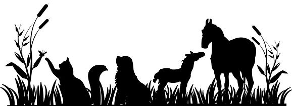 Natural Pet products holistic