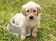 Puppy Nutrition Diet
