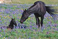 Horse supplements New Zealand