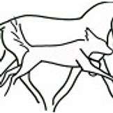 Animal Osteopath Chiropractor Horses Dogs Wairarapa Wellington