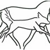 Horse Dog Canine massage Wairarapa Wellington