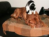 Animal Massae Bowen Therapy