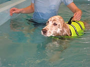 Animal Hydrotherapy Dog