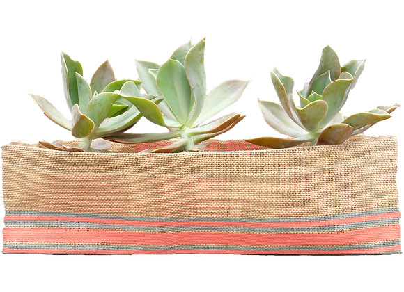 Jute planter guava stripe availble