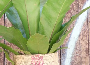 Scroll Pink Pot Plant Holder