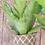 Thumbnail: Pot Plant Holder - charcoal baroque