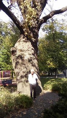 Фото дерева - ему 560 лет - Дуб. И Валерий Дзябенко рядом с деревом. Композитор ,аранжировщик и гитарист.