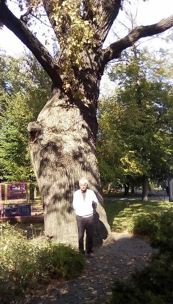Фото дерева - ему 560 лет - Дуб.