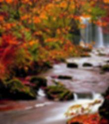 5532220-fall-wallpaper.jpg