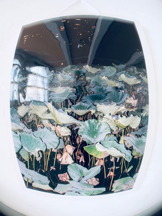 Teil der Installation ein Fotodruck von Lotus in Tokio / Part of the installation a photo print of Lotus in Tokyo