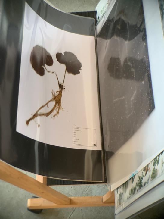 Kopien des Herbariums im Verkauf / Copies of the herbarium on sale