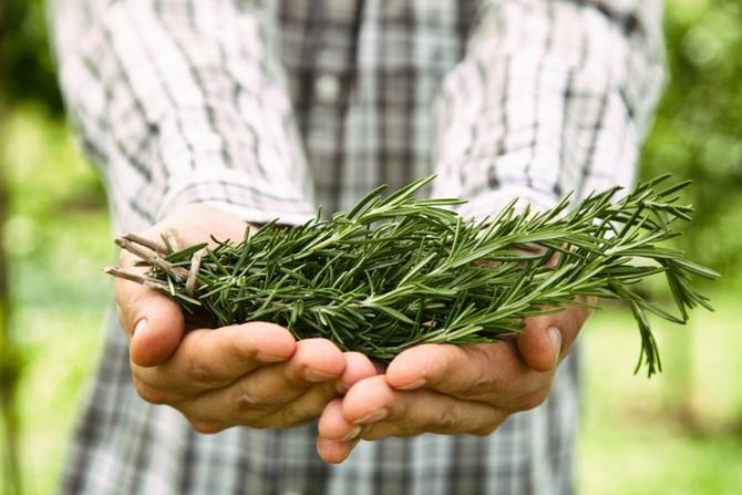 9 ervas e especiarias que vão melhorar a sua saúde