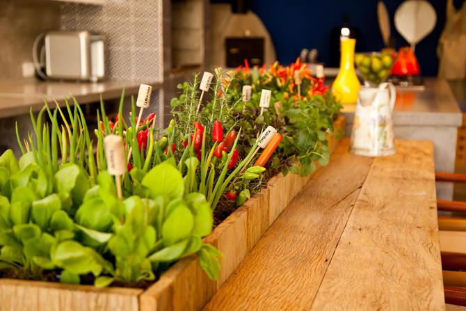 6 vegetais simples de plantar em casa