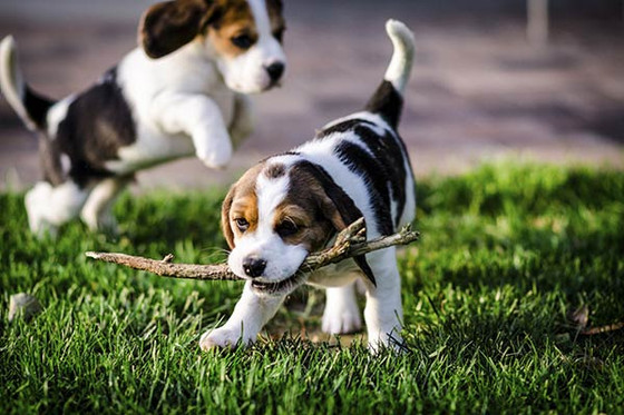 Puppy Socialization: Why, When, and How to Do It Right