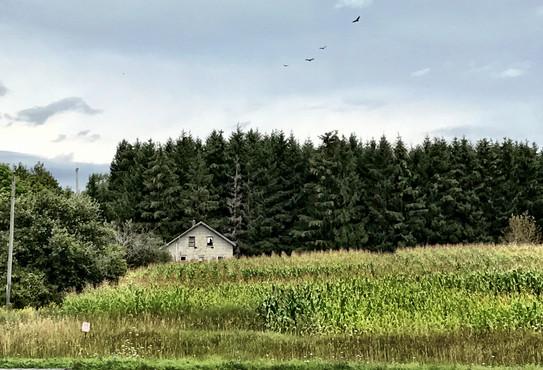Old farm.jpg