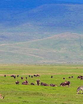 ngorongoro-crater-game-viewing.jpg