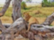 lion-277328_960_720.jpg