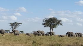 Elephants Tarangire 7-18.jpg