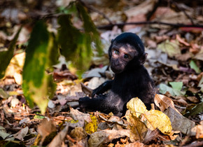 Discovering the Tangkoko Locals