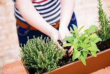 08_planting_Gardening-Pros-Reveal-How-to