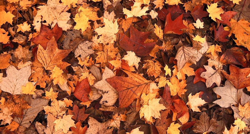 autumn-111315_1920_edited.jpg