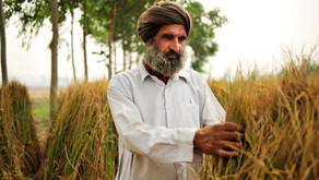 Punjab's Water Woes: A Man Made Disaster