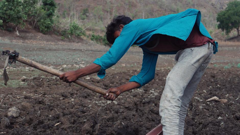 Tending the soil with tank silt