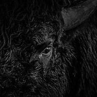 Ferme de Bison