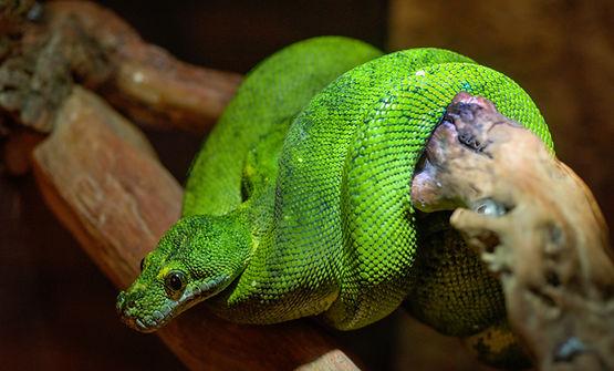 Fish and Wildlife, Snake, Snakeskin, Exotic