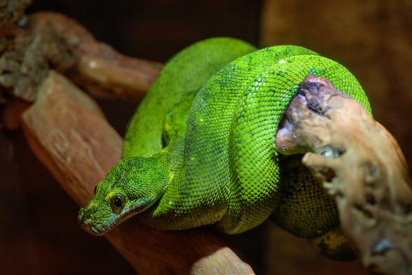 The Snake & God's Love