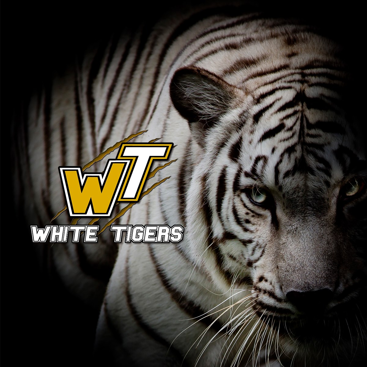 White-Tigers2