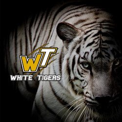 White-Tigers2