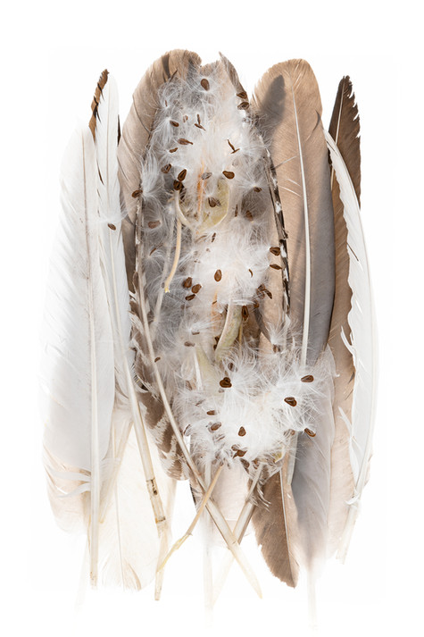 Milkweed Nest