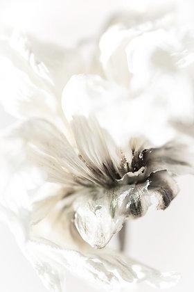 Reger- Platinum Nature
