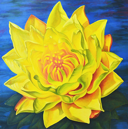 Rebelle- Yellow Water Lily