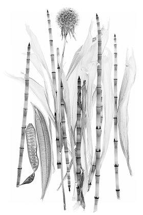 Wolff- Corn Husk 1