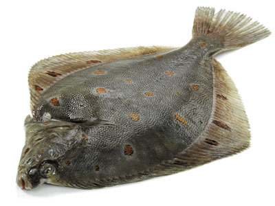 Fresh plaice