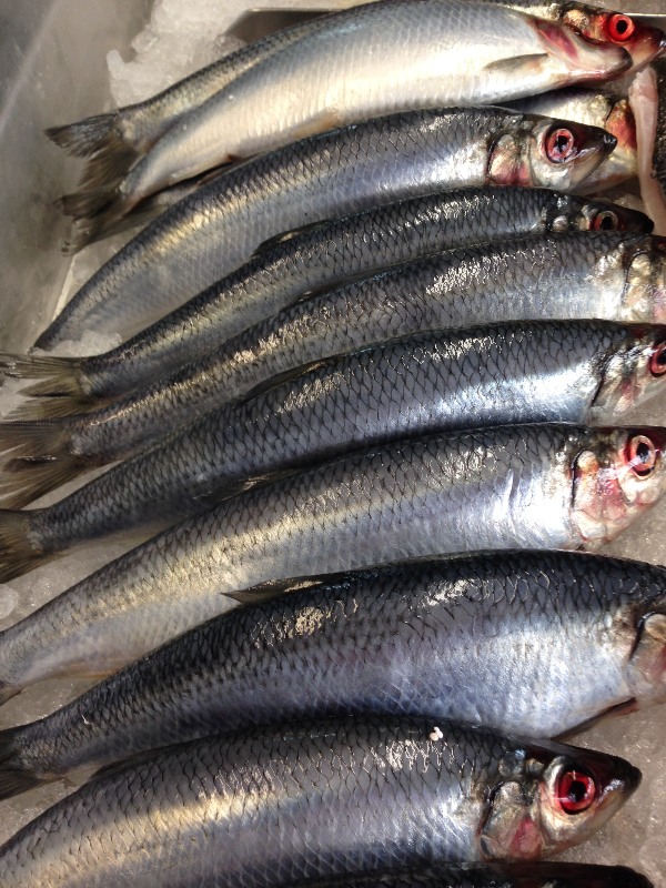 Fyne fish - Fresh herring