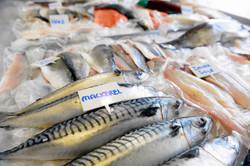 Cumbrian caught mackerel