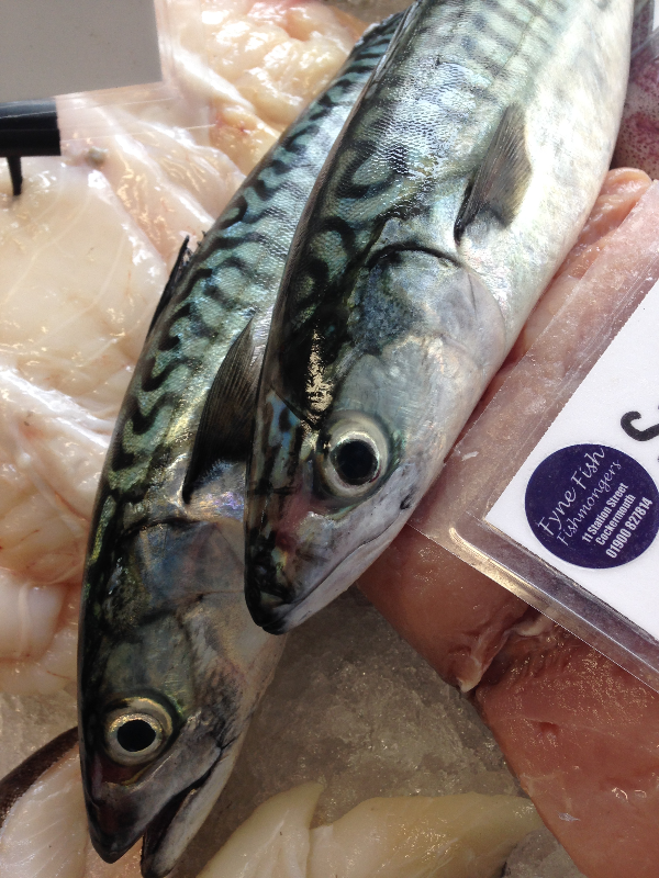 Cumbrian caught mackerel