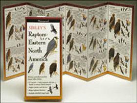 FoldingGuides: Sibley's Raptors of Eastern North America