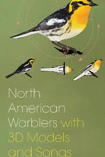 North American Warbler Fold-out Guide With 3D Models and Songs  Scott Whittle &