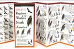 FoldingGuides: Sibley's Raptors of Western North America