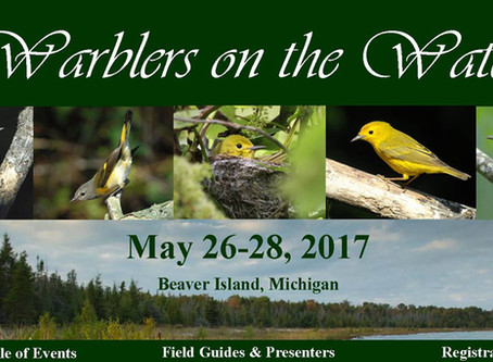 Warblers (and Birders) on the Water