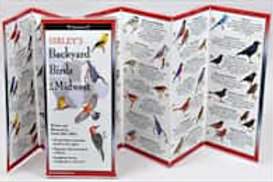 FoldingGuides: Sibley's Backyard Birds of the Midwest