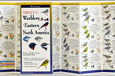 FoldingGuides: Sibley's Warblers of Eastern North America
