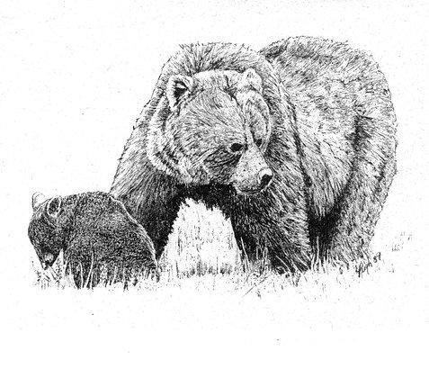 Wildlife Notecards