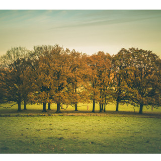 8 - windsor great park trees.jpeg